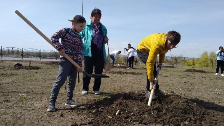 В Саратовской области планируют посадить более 300 тысяч деревьев
