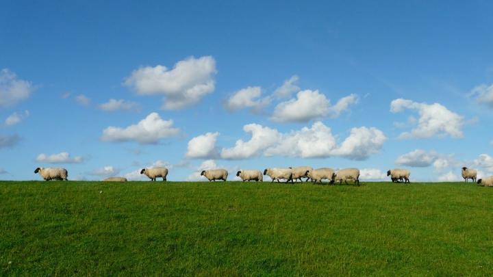 Пастух украл «ничейных» овец. Возбуждено уголовное дело