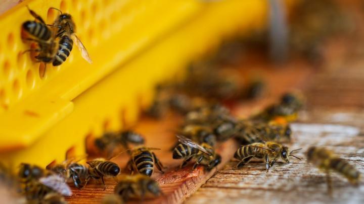 В Саратовскую область пытались нелегально провезти 6 тысяч пчёл