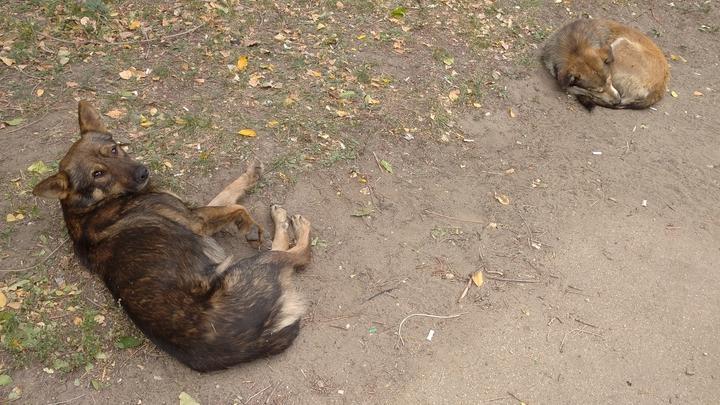 От укусов животных пострадал 71 житель Саратовской области