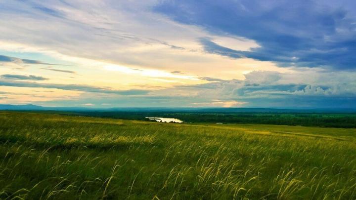 Сорняки стоили землевладельцу 20 тысяч рублей штрафа