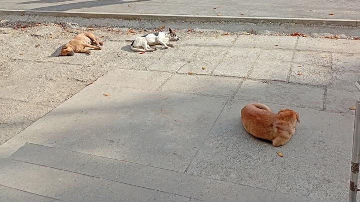 До конца года в Саратове отловят 197 собак