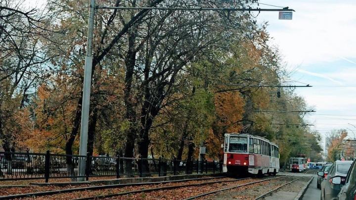 Трамваи № 3 в Саратове стояли из-за упавшего дерева