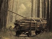 Ершовца убили лопатой и расчлененный труп вывезли в лес на тележке