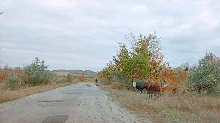В четырех районах Саратовской области отремонтируют дороги почти за 3 миллиарда рублей