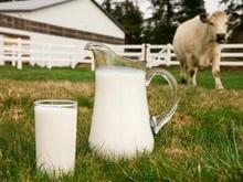 Саратовская область - на шестом месте в стране по производству молока