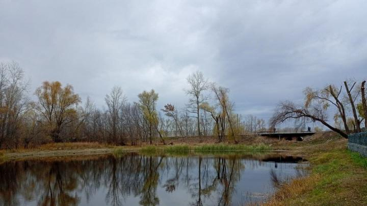 Сильный ветер и потепление ожидаются в Саратовской области