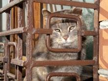 За долги хозяйки приставы арестовали кошку