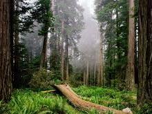 В лесу найдена зарезанная женщина