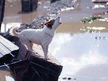 Почта России бесплатно доставит денежные переводы пострадавшим от наводнения
