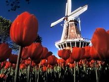 Саратовская область подписала договор о сотрудничестве с Нидерландами