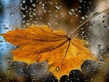 Прогноз погоды в Саратове на 25 сентября. Умеренный дождь