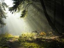 Саратовские леса - одни из самых безопасных в Приволжье