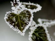 По ночам в Саратов будет приходить зима