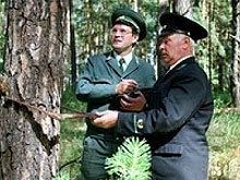 Подсчитано количество земли на каждого лесника Саратовской области