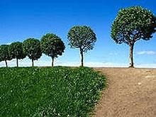 В Саратове посадили семь тысяч деревьев