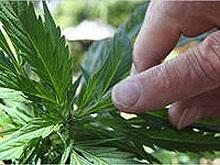 Осужденному не разрешили лечиться от наркомании