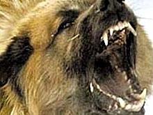 Ветеринары расправились с бешенством в Балашове