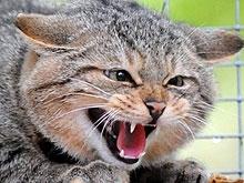 Охотники отстрелили более трехсот бешеных кошек
