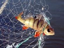 Рыбоохрана за месяц вытащила восемь километров браконьерских сетей