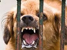 В 17 районах отметен карантин по бешенству животных