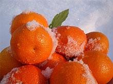Подробности крушения фуры с мандаринами. Водитель скончался в больнице