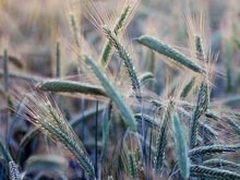 Аграрии Саратовcкой области получат 904 миллионов рублей