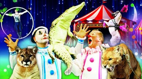 """В Саратове впервые пройдут гастроли цирка """"Джемелли"""" с канадскими пумами"""
