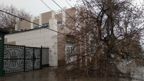В Саратове из-за сильного ветра упали три дерева
