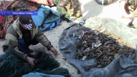 В Пугачевском районе задержаны раколовы