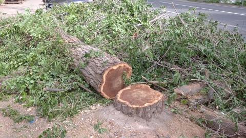 Суд обязал мэрию Саратова посчитать деревья в городе