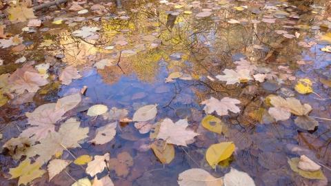 Показания термометров в Саратовской области стабильно снижаются