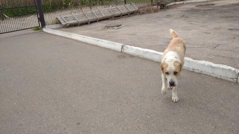 Бешеная собака отправила на карантин поселок в Саратовской области