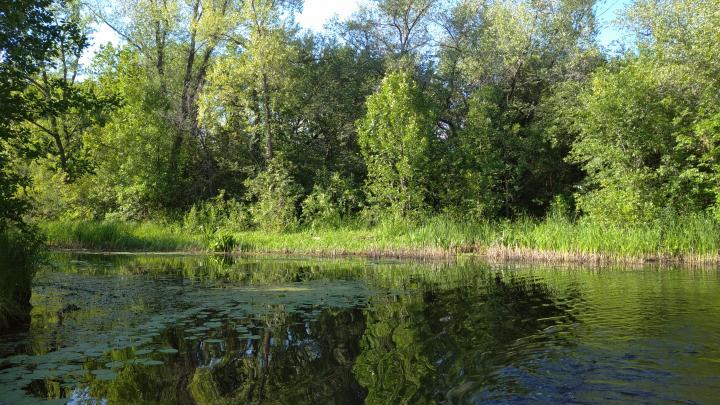 Продлен запрет на отдых в лесах Саратовской области