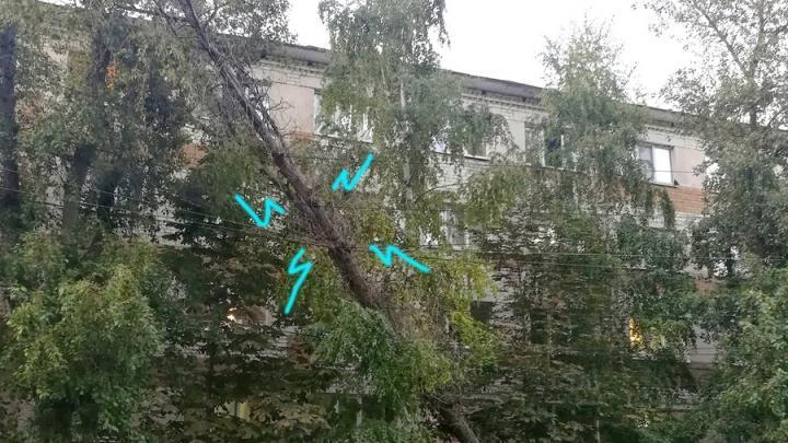 Падающий тополь на Беговой уберут до конца недели