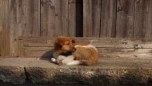 Мэр Исаев увеличил тарифы на отлов собак в Саратове