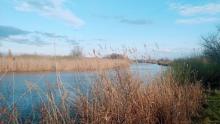 В водоемах Саратовской области продолжает массово гибнуть рыба