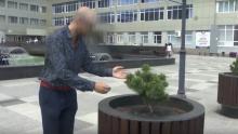 Саратовец выкопал сосны на проспекте и продал за три тысячи рублей