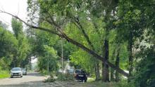 После ночного шторма в Саратове на проводах висят деревья