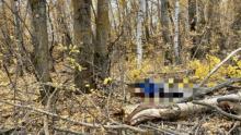 Мужчину убила ветка сухого дерева в Новобурасском районе